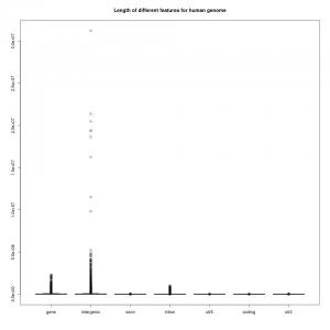 人类基因组不同特征的长度统计